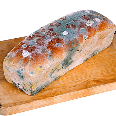 bread-loaf-moldy